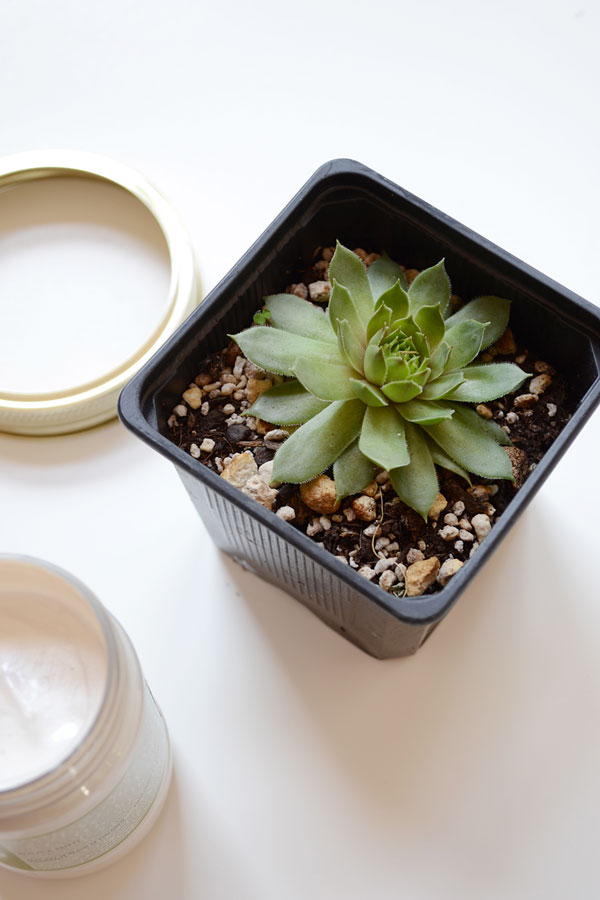Simple Decorating with Succulents | Storypiece.net