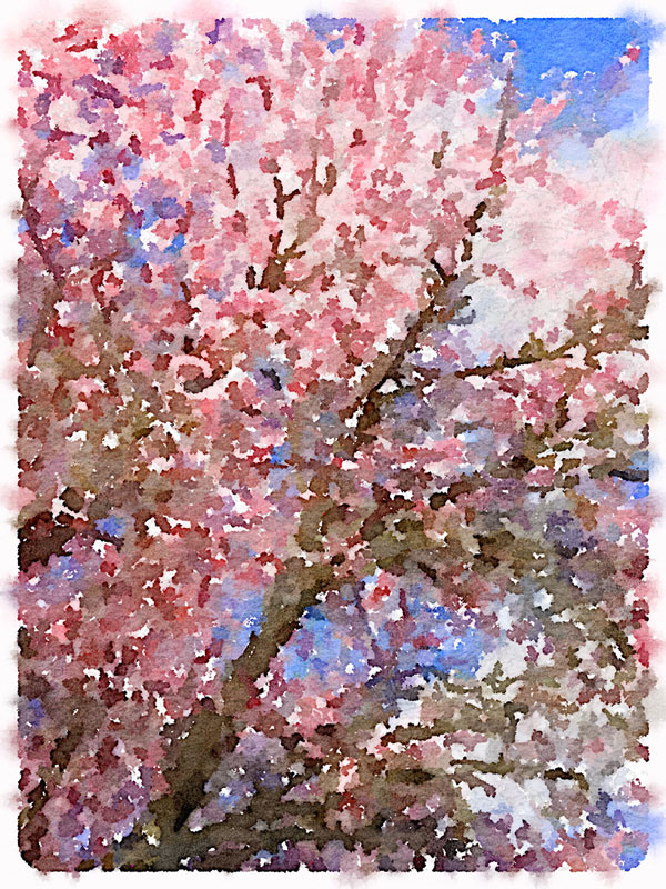 Cherry Blossom Artwork | Storypiece.net