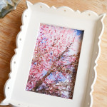 How to Create Watercolor Artwork for Spring