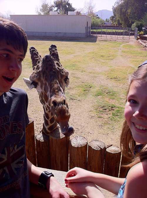 Giraffes | Storypiece.net