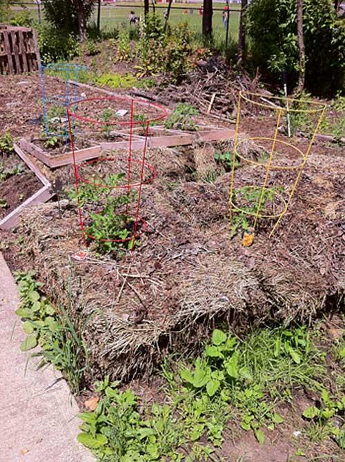 Tomato Planters | Storypiece.net