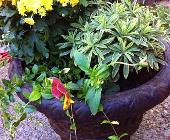 Planted Pots | Storypiece.net