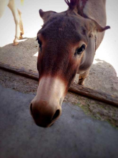 Donkey   Storypiece.net