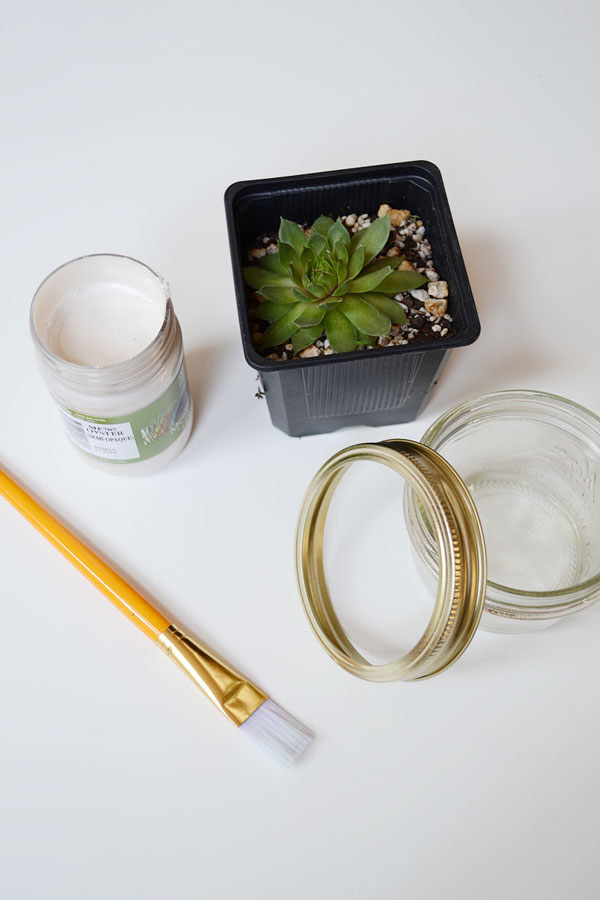 Mason Jar Succulent | Storypiece.net