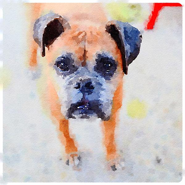 Waterlogue Pet Portrait | Storypiece.net
